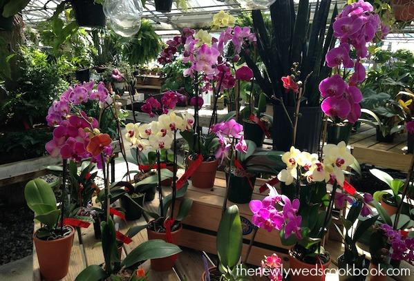 flowers 3 .jpg