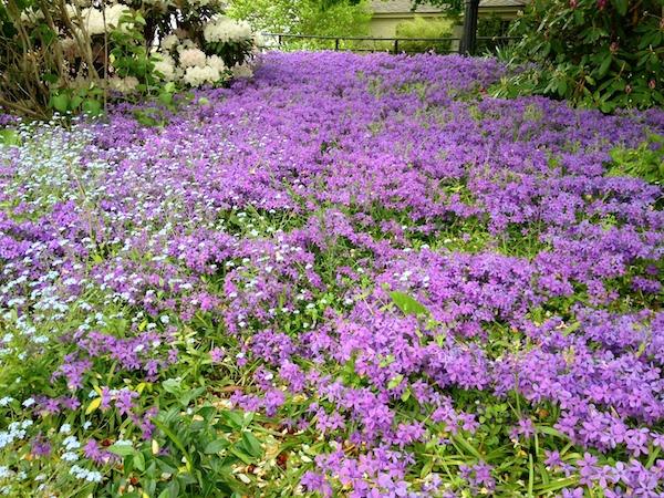 gardens 22.jpg